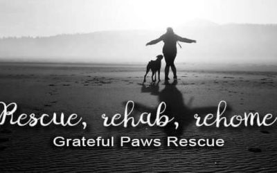 Free hot yoga class to support Grateful paws rescue